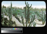 Huntington, Henry E., Art Gallery, Library and Gardens, Cactus Garden