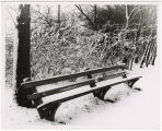 [Park Bench in Snow]